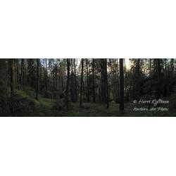 Metsä - Tapetti