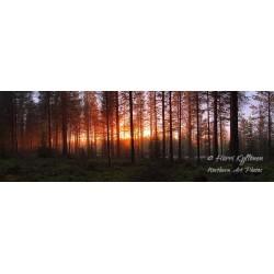 Uinuva metsä - Tapetti