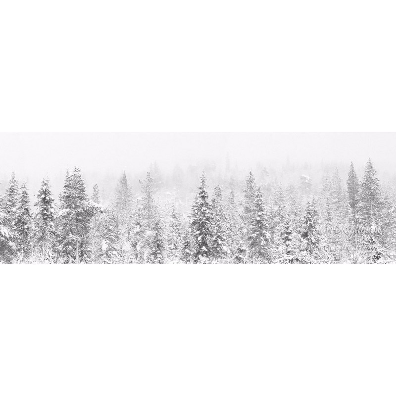 Utuinen metsä - Tapetti