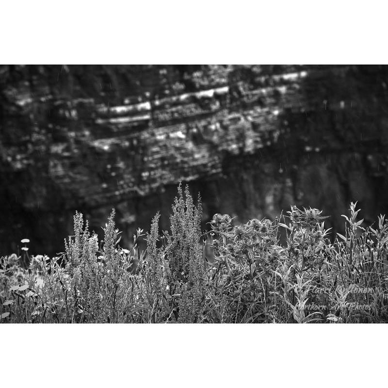 Cliffs of Moherin kukat II - Tapetti