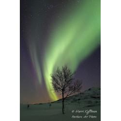 Aurora birch - Wallpaper
