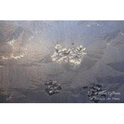 Ice flowers on window II -...