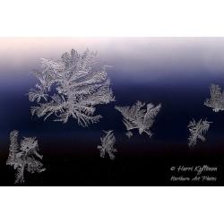 Ice on window - Wallpaper