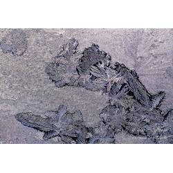 Printed ice - Wallpaper