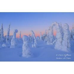 Talvi-ihmemaa - Tapetti