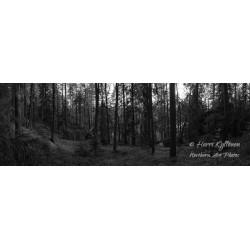 Metsä - Juliste