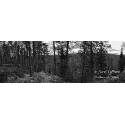 Forest and river b&w - HD -...