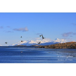 Cormorants and mountains -...
