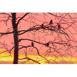 Enjoying the sunset - Poster