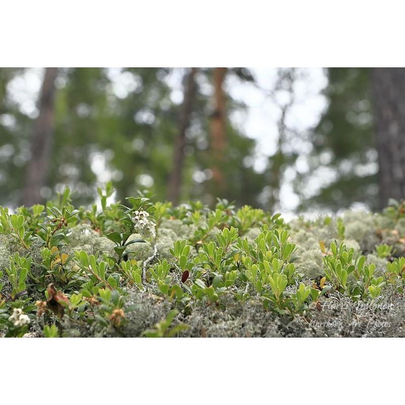Metsän pienoismalli - Juliste