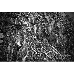 Treemoss - Poster