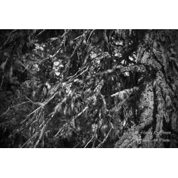 Treemoss II - Poster
