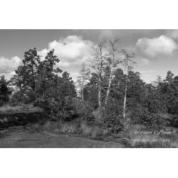Puut kalliolla II - Juliste