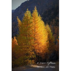Autumn colour glow - Poster