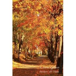 Fall street - Poster