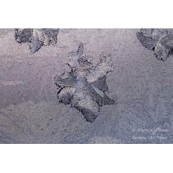 Ice flower - Poster