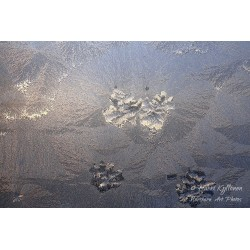 Ice flowers on window II -...