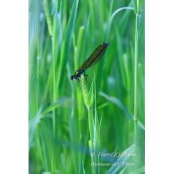 Sininen sudenkorento - Palapeli