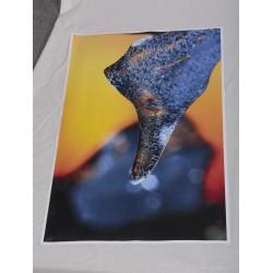 Jääpää - 60x90cm juliste