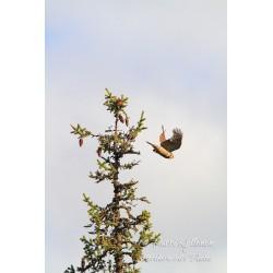 Hiiripöllön lähtö - Palapeli