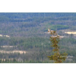 On a vantage point III -...