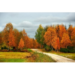 Autumn road - Puzzle