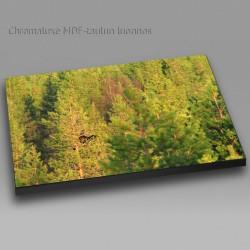 Wood Grouce - Chromaluxe...