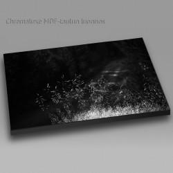Salainen metsätie mv - Chromaluxe taulu