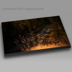 Salainen metsätie - Chromaluxe taulu