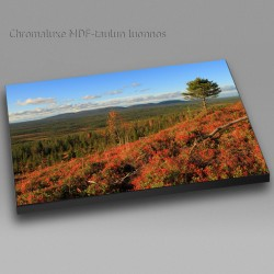 Outlandish spruce - Chromaluxe picture