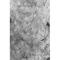 Vanha puu - Canvas-taulu