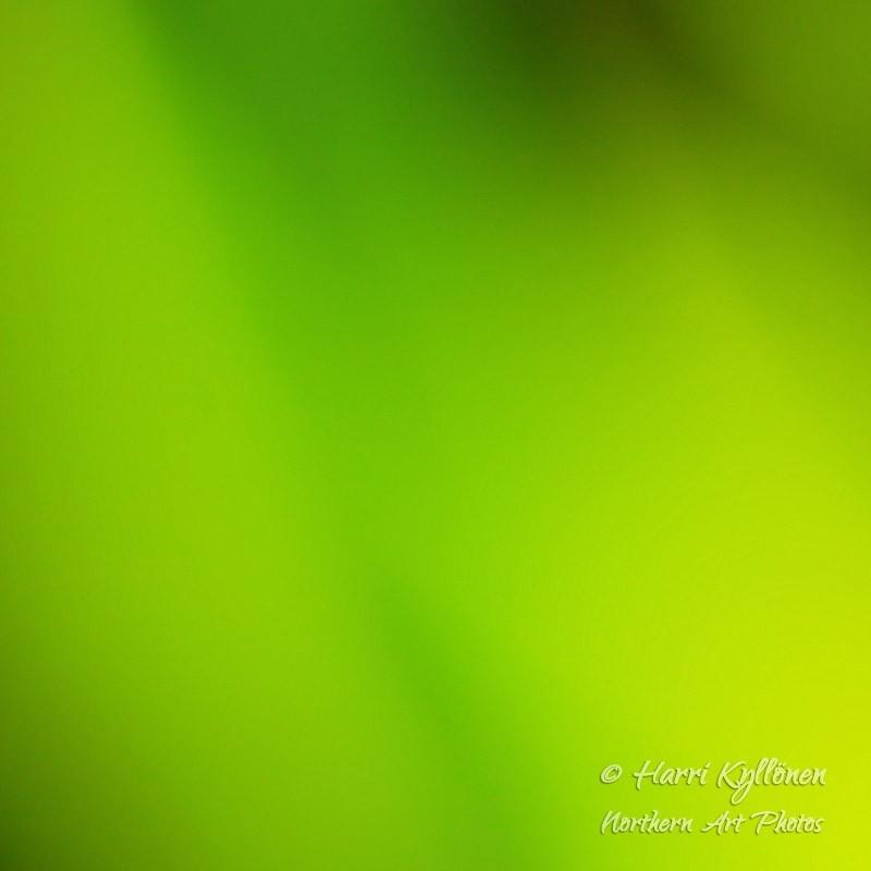 Vihreänsävyt - Canvas-taulu