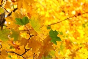 Autumn colours Maisematapetit mittojen mukaan