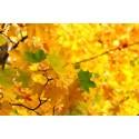 Rectangle Autumn colours