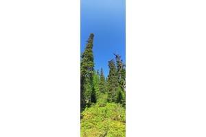 Pystymalliset Panoraama canvas-taulut verkkokaupastamme