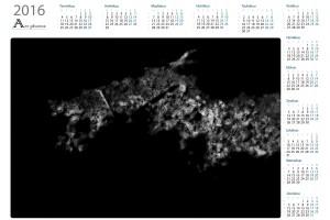 Abstracts vuosikalenterit  - Northern Art Photos | Kattava valikoima laadukkaita vuosikalentereita
