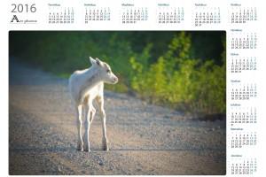 Eläimet, linnut ja hyönteiset vuosikalenterit  - Northern Art Photos | Kattava valikoima laadukkaita vuosikalentereita
