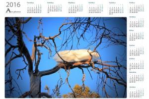 Spring vuosikalenterit  - Northern Art Photos | Kattava valikoima laadukkaita vuosikalentereita
